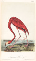 Books:Natural History Books & Prints, John James Audubon. The Birds of America, from Drawings Made in the United States and their Territories. New Yor... (Total: 7 Items)