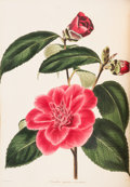 Books:Natural History Books & Prints, [Botany]. Conrad Loddiges & Sons. The Botanical Cabinet. Consisting of Coloured Delineations of Plants, from all C... (Total: 9 Items)