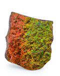 Fossils:Cepholopoda, Ammolite Fossil. Placenticeras sp.. Cretaceous. BearpawFormation. Alberta, Canada. 4.91 x 4.46 x 0.48 inches (12.48 x11....
