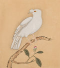 Works on Paper, Chinese School . Six Chinese Paintings of Bird, Qing Dynasty, Daoguang period. Ink and color on paper. 11-3/4 x 10-1/2 i... (Total: 6 Items)