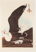 Books:Natural History Books & Prints, John James Audubon. Group of Nineteen Reproduction Prints. [New York and elsewhere: 1860-2002]. Includes one Bien, one 2002 ...