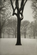 Photographs:Gelatin Silver, Jefferson Hayman (American, b. 1969). Tree, Central Park (two works), 2003. Gelatin silver. 9 x 6-1/4 inches (22.9 x... (Total: 2 Items)