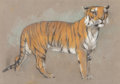 Paintings:Contemporary, Arthur Wardle (British, 1864-1949). Sketch of a Tiger and Sketch of Leopard (double sided work). Pastel on paper. 10...