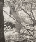 Photographs:Gelatin Silver, Ruth Bernhard (American, 1905-2006). Among the Leaves, 1971.Gelatin silver, printed later. 6-1/2 x 7-1/2 inches (16.5...