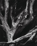 Photographs:Gelatin Silver, Ansel Adams (American, 1902-1984). Sequoia Roots, Mariposa Grove, Yosemite National Park, California, 1950. Gelatin silv...