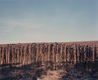 Tod Papageorge (American, b. 1940) Five Views of Spanish Landscapes (5 works), 1989 Dye coupler 1... (Total: 5)