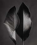 Photographs:Gelatin Silver, Ruth Bernhard (American, 1905-2006). Two Leaves, Hollywood, California, 1952. Gelatin silver, printed later. 18-7/8 x 15...