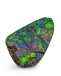 Fossils:Cepholopoda, Ammolite Fossil. Placenticeras sp.. Cretaceous. BearpawFormation. Alberta, Canada. 3.24 x 2.11 x 0.33 inches (8.23 x5.37...