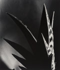 Photographs:Gelatin Silver, Imogen Cunningham (American, 1883-1976). Aloe, 1925. Gelatin silver, printed later. 9 x 7-3/4 inches (22.9 x 19.7 cm). P...