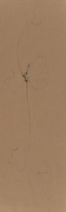 Fine Art - Work on Paper, Willie Young (American, b. 1942). Root Drawing, 2001. Pencilon buff paper. 28 x 9 inches (71.1 x 22...
