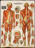 Movie Posters:Miscellaneous, Chart of the Muscular System (1910). Fine on European Line...