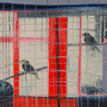 Fine Art - Painting, American:Contemporary   (1950 to present), Hunt Slonem (American, b. 1951). Mynas, 1988. Oil on canvas.48-1/4 x 48-1/4 inches (122.6 x 122.6 cm). Signed, titled, ...