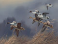 Fine Art - Painting, American:Contemporary   (1950 to present), Harry Curieux Adamson (American, 1916-2012). NorthernPintails. Gouache on board. 12-1/4 x 16 inches (31.1 x 40.6cm). S...