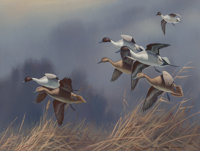 Harry Curieux Adamson (American, 1916-2012) Northern Pintails Gouache on board 12-1/4 x 16 inches
