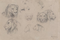 Rosa Bonheur (French, 1822-1899) Study of heads of lions and lionesses Charcoal with white chalk 11 x 16-3/4 inches (
