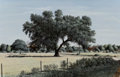 Paintings:Contemporary   (1950 to present), Will Hinds (American, 20th Century). Live Oak. Oil on board. 17-1/2 x 27 inches (44.5 x 68.6 cm). Signed lower left: W...