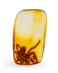 Amber, Amber with Inclusions. Eocene. Baltic Region.Russia. 0.71 x 0.41 x 0.16 inches (1.80 x 1.04 x 0.40cm). ...