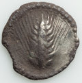 Ancients: LUCANIA. Metapontum. Ca. 540-510 BC. AR stater or nomos (29mm, 7.92 gm, 12h). VF, chipped, horn silver