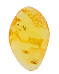 Amber, Amber with Inclusions. Eocene. Baltic Region. Russia. 1.00 x 0.64 x 0.20 inches (2.54 x 1.62 x 0.51 cm). ...