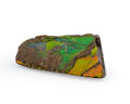 Fossils:Cepholopoda, Ammolite Fossil. Placenticeras sp.. Cretaceous. BearpawFormation. Southern Alberta, Canada. 2.15 x 1.08 x 0.26 inches(5....