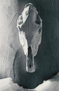 Photographs:Digital, Unknown Artist (20th Century). Untitled (Skull). Digital pigment print. 17-3/4 x 11-3/4 inches (45.1 x 29.8 cm). ...