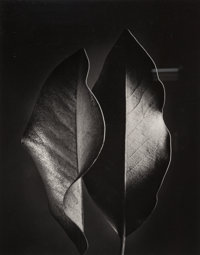 Ruth Bernhard (American, 1905-2006) Two Leaves, 1952 Gelatin silver, printed later 13-1/2 x 10-5/