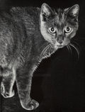 Photographs:Gelatin Silver, Various Artists (20th Century). A Group of Four Cat Photographs (4 works). Gelatin silver. 10-1/2 x 13-3/8 inches (26.7 ... (Total: 4 )