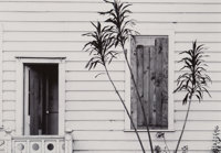Pirkle Jones (American, 1914-2009) Untitled (House and Plant) Gelatin silver 6-1/2 x 9 inches (16
