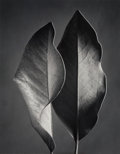 Photographs:Gelatin Silver, Ruth Bernhard (American, 1905-2006). Two Leaves, 1952. Gelatin silver, printed later. 13-1/2 x 10-1/2 inches (34.3 x 26....
