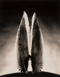 Photographs:Gelatin Silver, Ruth Bernhard (American, 1905-2006). Angel Wing, 1943. Sepia toned gelatin silver, printed later. 13-1/2 x 10-5/8 inches...