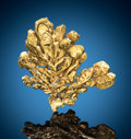 Minerals:Thumbnail, Native Gold. Coulterville, Coulterville District, Mother Lode Belt, Mariposa Co., California, USA. ...