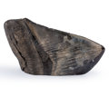 Fossils:Fish, Megalodon Shark Tooth Paperweight. Carcharocles megalodon. Miocene. Morgan River, South Carolina, USA. 5.05 x 2.57 x 1.07 ...