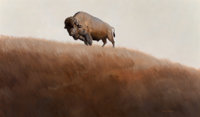 Glen Spencer Hopkinson (American, b. 1946) Buffalo, 1980 Oil on Masonite 35 x 59 inches (88.9 x 149.9 cm) Signed and