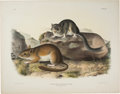 Books:Natural History Books & Prints, J. J. Audubon. Group of Four Rodents from Quadrupeds of North America. Philadelphia: 1843-1848. From the first imper...