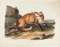 Books:Natural History Books & Prints, J. J. Audubon. American Red-Fox, Male. Philadelphia: 1896. From the first imperial folio edition of Quadrupeds....