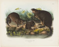 Books:Natural History Books & Prints, J. J. Audubon. Group of Three Rodents from Quadrupeds of North America. Philadelphia: 1843-1848. From the first ...