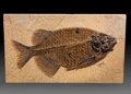 Fossils:Fish, Fossil Fish. Phareodus sp.. Eocene. Green River Formation. Wyoming, USA. 10.43 x 6.10 x 0.51 inches (26.50 x 15.50 x 1.30 ...