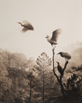 Photographs:Gelatin Silver, Don Hong-Oai (Chinese, 1929-2004). Birds in Flight, 1984. Toned gelatin silver. 19 x 15-1/8 inches (48.3 x 38.4 cm). Pho...