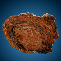 Petrified Conifer Slab Araucarioxylon Triassic Chinle Formation Arizona, USA