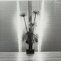 Photographs:20th Century, Robert Mapplethorpe (American, 1946-1989). Flower, 1980. Gelatin silver. 14 x 14 inches (35.6 x 35.6 cm). Signed, dated,...