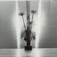 Robert Mapplethorpe (American, 1946-1989) Flowers with Blinds, 1980 Gelatin silver 14 x 14 inches (35.6 x 35.6 cm) S