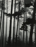 Photographs:Gelatin Silver, Brett Weston (American, 1911-1993). Pines in Fog, 1962. Gelatin silver, printed later. 13-1/2 x 10-1/4 inches (34.3 x 26...