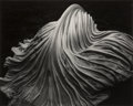 Photographs:Gelatin Silver, Edward Weston (American, 1886-1958). Cabbage Leaf, 1931. Gelatin silver, printed later by Cole Weston. 7-1/2 x 9-3/8 inc...