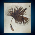 Fossils:Paleobotany (Plants), Double Fossil Palm Frond. Sabalites sp.. Eocene. Green River Formation. Wyoming, USA. ...