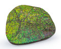 Fossils:Cepholopoda, Ammolite Fossil. Placenticeras sp.. Cretaceous. Bearpaw Formation. Alberta, Canada. 3.11 x 2.60 x 0.29 inches (7.89 x 6.61...