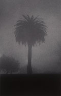 Photographs:Gelatin Silver, Michael Kenna (British/American, b. 1953). Palm Tree, San Francisco, California, 1983. Sepia and Selenium toned gelatin ...