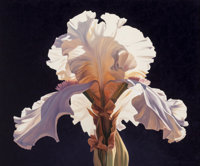 Ed Mell (American, b. 1942) Symmetrical Iris, 1994 Oil on canvas 39-1/2 x 48 inches (100.3 x 121.9 cm) Signed lower