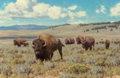 Fine Art - Painting, American, Tucker Smith (American, b. 1940). Herd of Bison, 1995. Oil on canvas. 16 x 24 inches (40.6 x 61.0 cm). Signed and dated ...