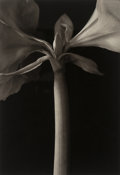 Photographs, Kenro Izu (American/Japanese, b. 1949). Still Life #595, 1997. Platinum-Palladium, 1999. 20 x 13-7/8 inches (50.8 x 35.2...