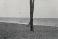 Photographs, Elliott Erwitt (American, b. 1928). Seagull and Crossed Trees, Daytona, Florida, 1975. Gelatin silver, printed later. 10...